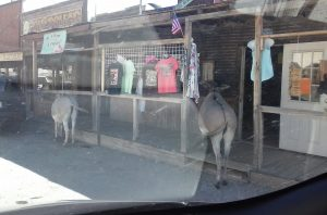 Oatman, AZ Route 66 The Mother Road